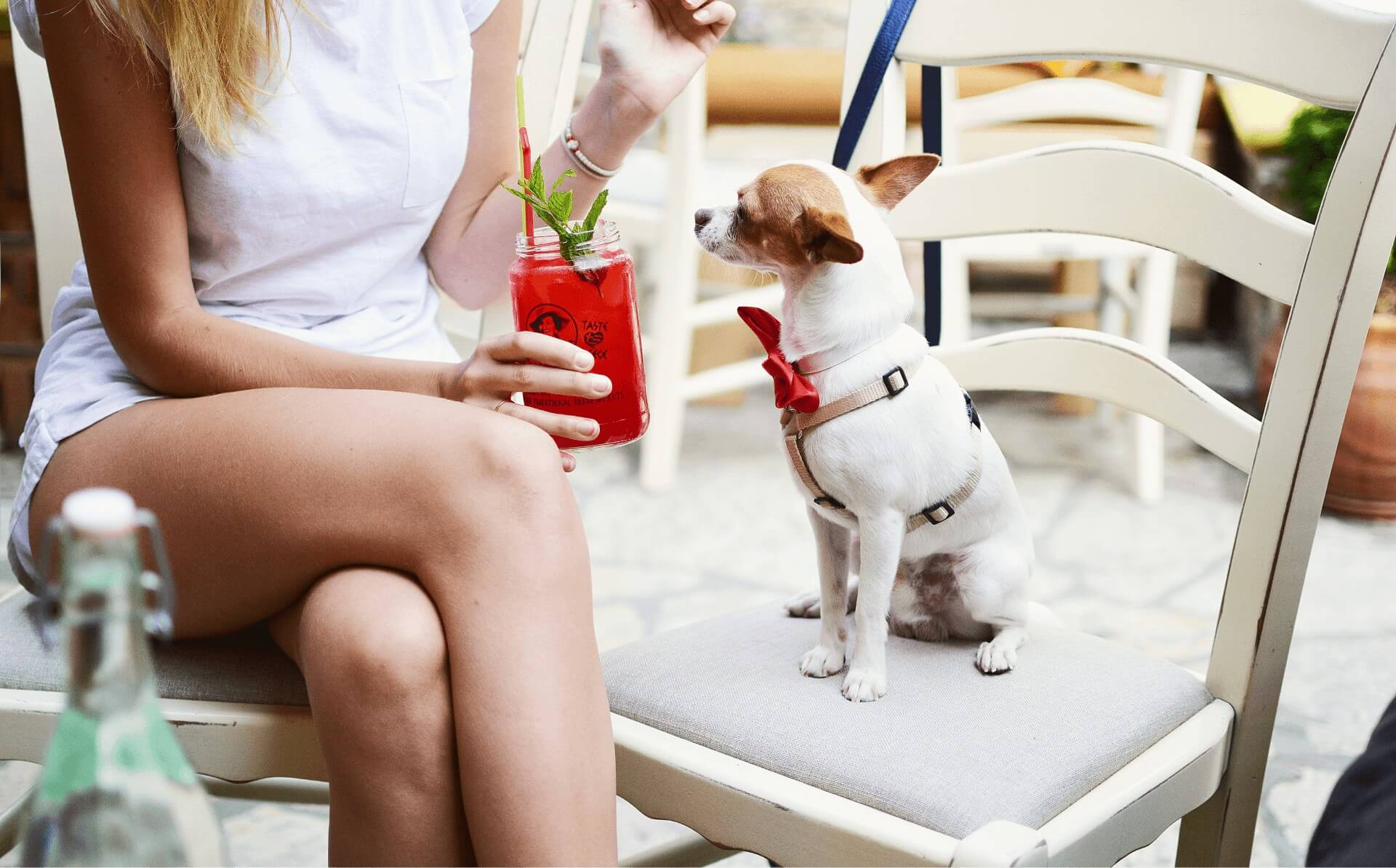 Puppy with a Delightful Cocktail